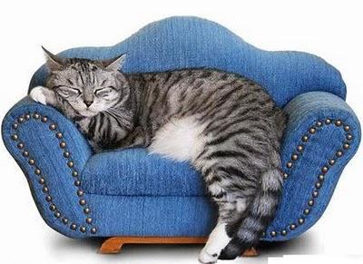 From catexpert.blogspot.com