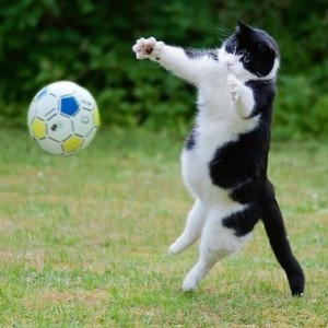 cat-playing-football1